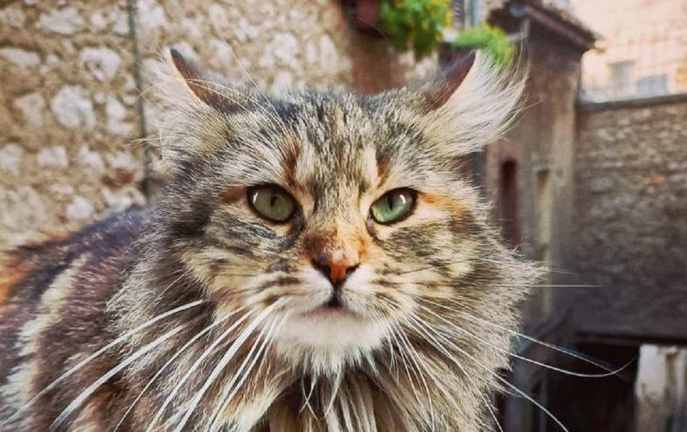 Vaccino covid per gatti, a che punto siamo