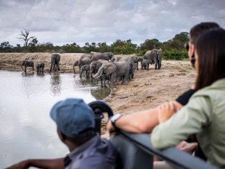 Un branco di elefanti nel Kruger Park