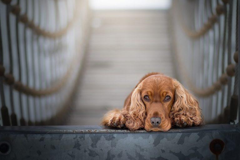 cane mangia mascherina e muore, la storia di Oscar