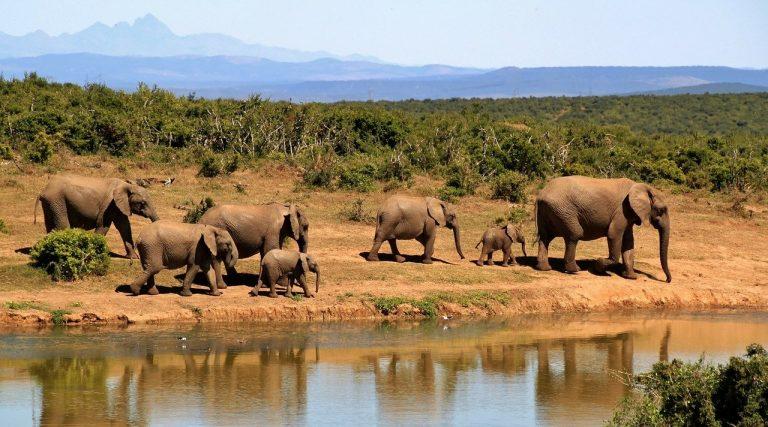 Lo Zimbabwe riapre la caccia agli elefanti