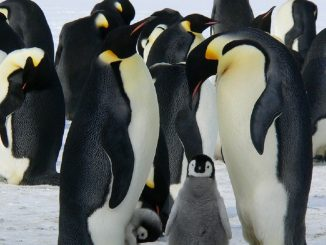 Il 25 aprile è la Giornata Mondiale del Pinguino