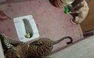 Cane e leopardo