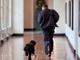 Obama e Bo alla Casa Bianca