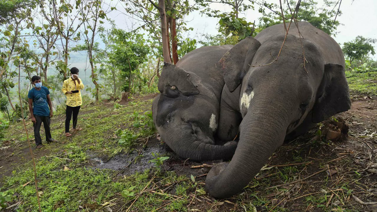 Branco di elefanti indiani morti fulminati in una foresta