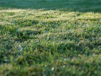 Come tagliare l'erba del giardino velocemente e senza fatica