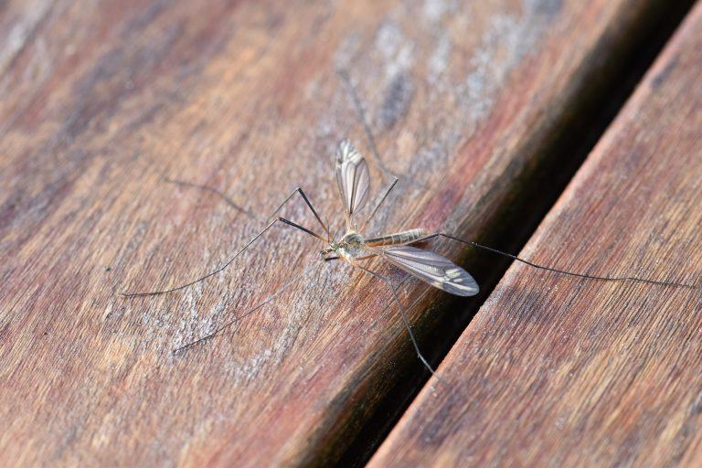 Zanzare in casa: come eliminarle definitivamente