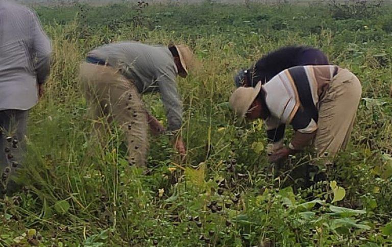 Migrante ucciso dal caldo mentre tornava dal lavoro nei campi
