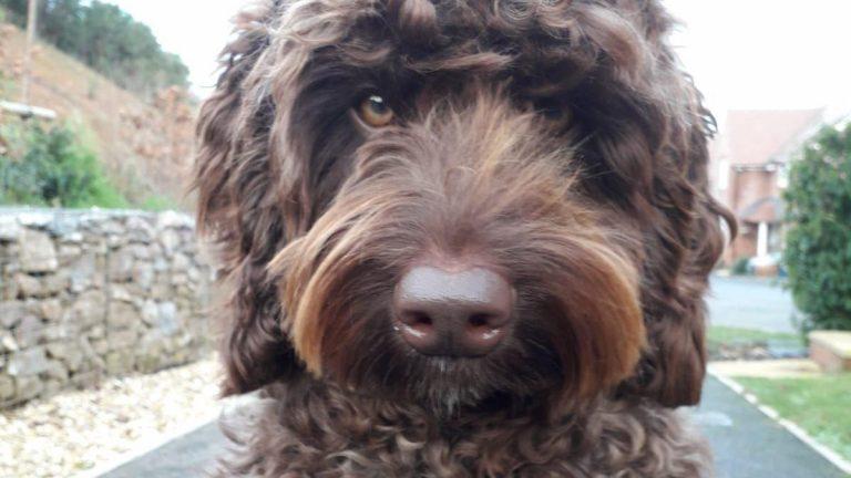 Il cane Digby