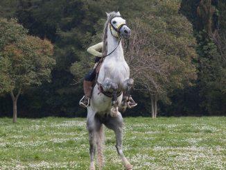 Firenze cavallo imbizzarrito