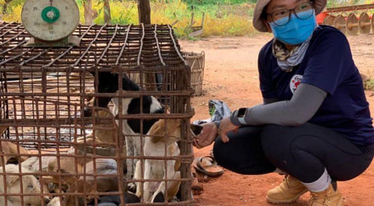 Immagine emblematica dell'orrore di Yulin