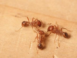 Come eliminare gli insetti