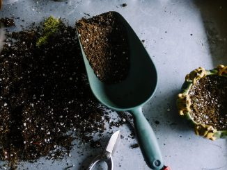 strumenti per curare il giardino