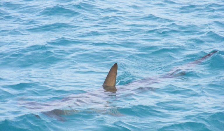 51enne ucciso da squalo
