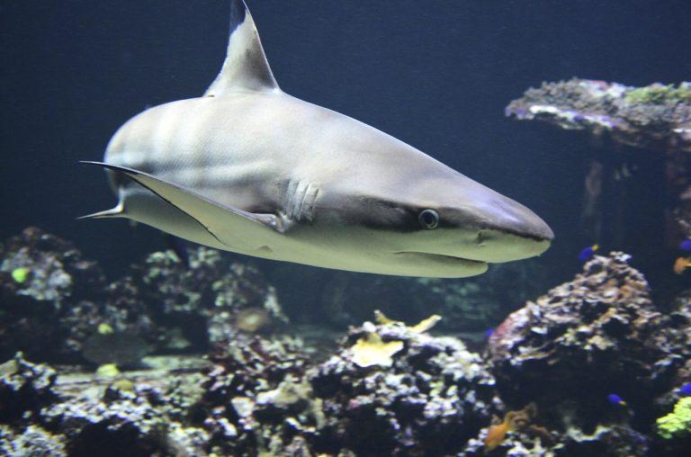 Attacco squali in Brasile