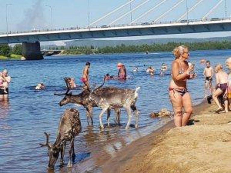 Un'immagine simbolod el caldo che da qualche anno sta interessando la Lapponia