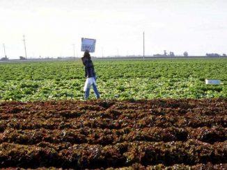 Afragola vieta il lavoro nei campi nelle ore più calde