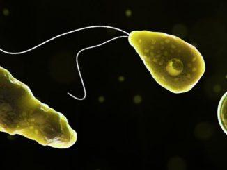 Ameba mangia-cervello