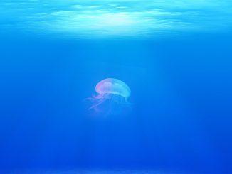 Bimbo punto da una medusa velenosa in Thailandia, morto