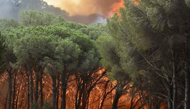 Incendi Calabria e Sicilia