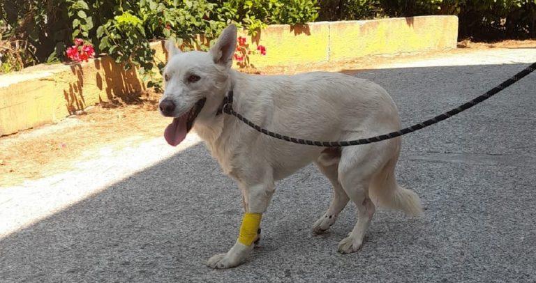Paraflu, il cane investito in autostrada sta meglio