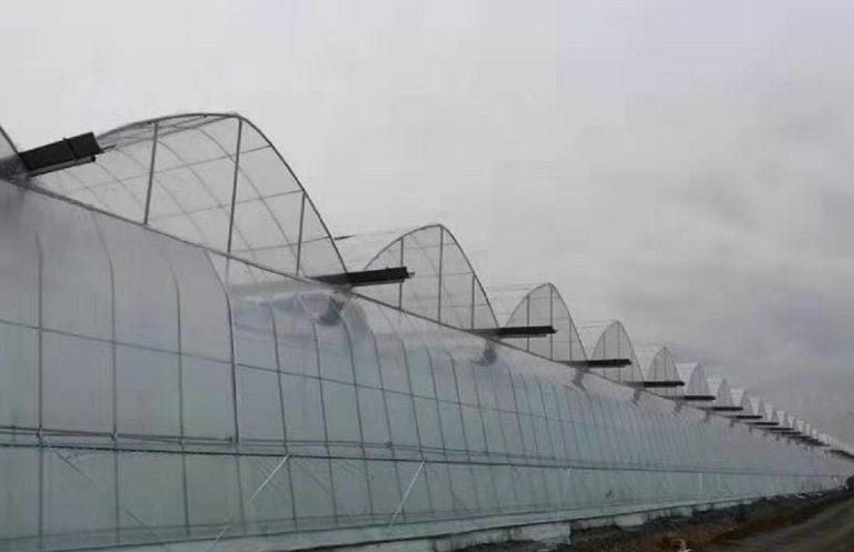 Alcune serre del gruppo Greenhouse