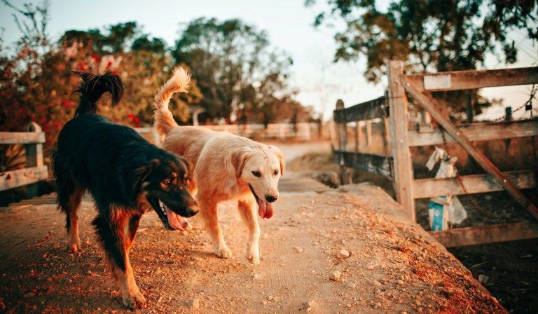 Ventenne uccisa da cani