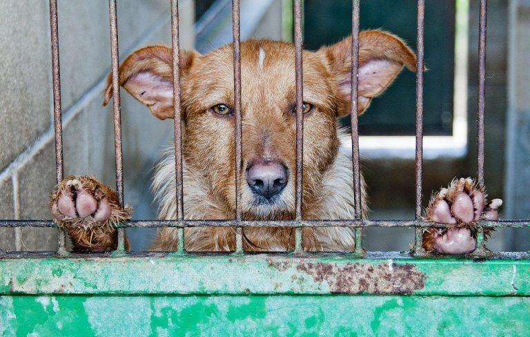 caged-278910_1280