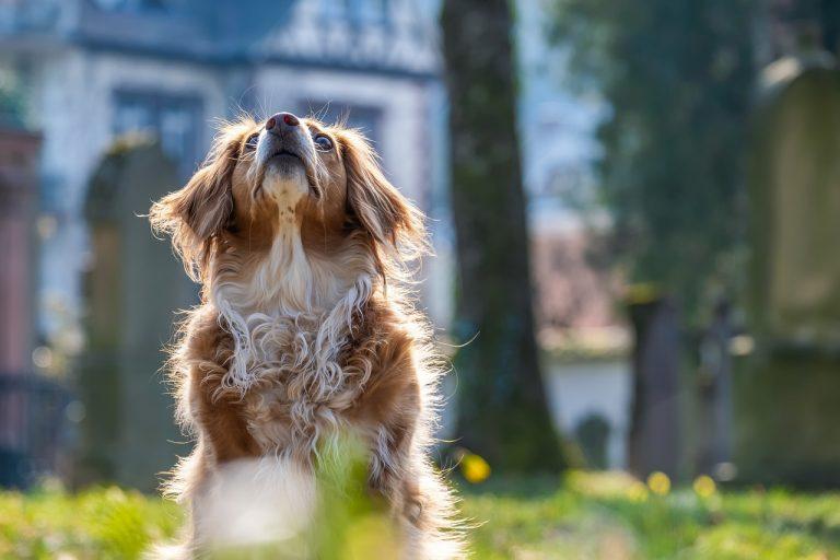 come curare cani pelo lungo