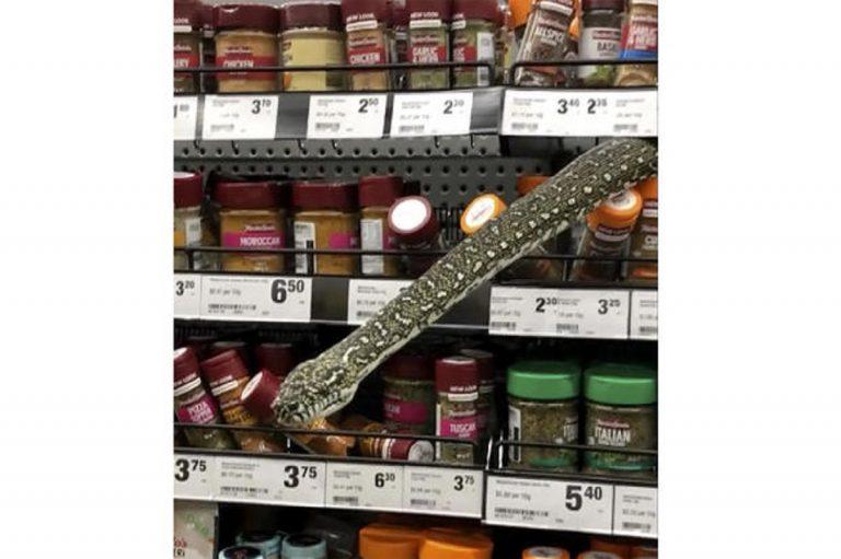 pitone al supermercato