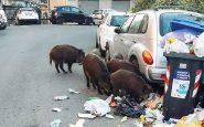 Cinghiali che grufolano fra i rifiuti di Roma
