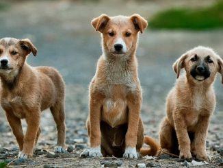Gran Bretagna ladri cani