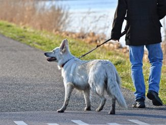 """""""Porto il cane a spasso"""", invece va dall'amante: moglie lo scopre proprio grazie all'amico a 4 zampe"""