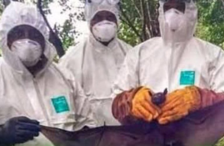 Virus Nipah in India