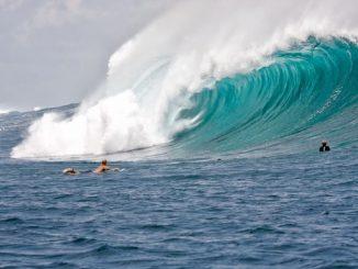 surfista australiano attaccato squalo
