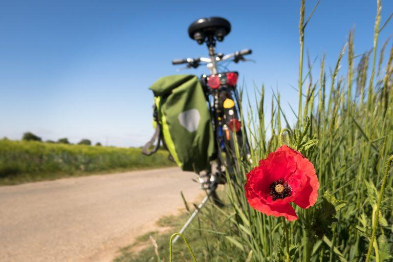 Ciclista avvinazzato fermato a Bologna