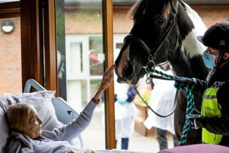 Jan Holman saluta cavallo
