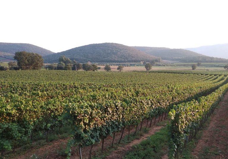 Focolaio covid in un'azienda vitivinicola