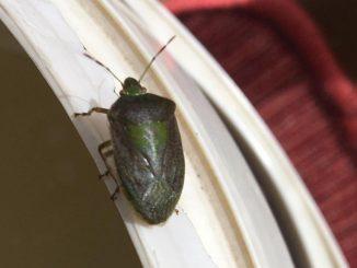 insetti autunnali