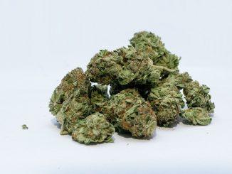 Marijuana per posta, una denuncia