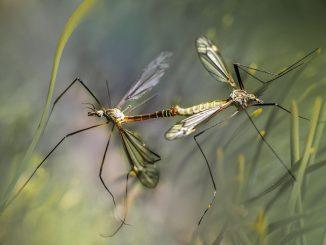 Zanzare a ottobre: come eliminarle definitivamente