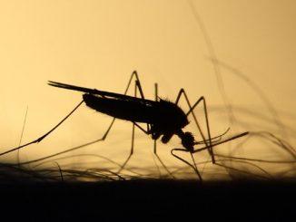 zanzara coreana Lombardia