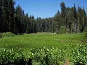 Tulare County CA 300x225