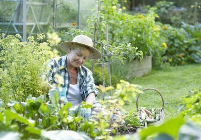 Piante da giardino decorative - Piante decorative da giardino ...