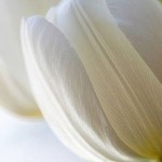 give flowers according symbolic meaning 1.4 800x800 150x150