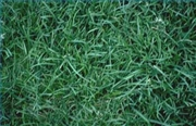 grow new grass fast 180x180