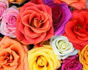 love blooms roses  bunch of flowers 300x240