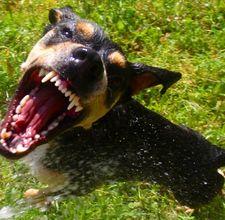 come evitare di essere morsi da un cane On sognare di essere morsi da un cane
