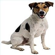 treat dogs hot spots 180x180