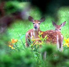 article page main ehow images a04 6t qb keep deer from eating flowers 800x800